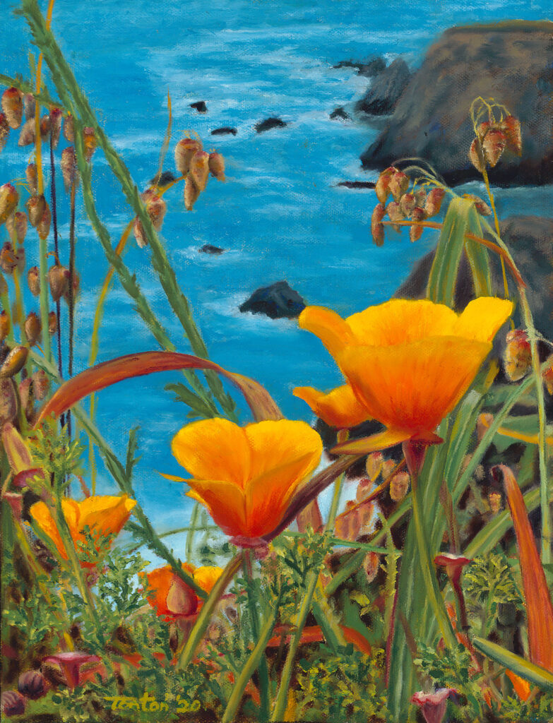 """Mendocino Poppies in Oil: Giclee 9""""x12"""""""