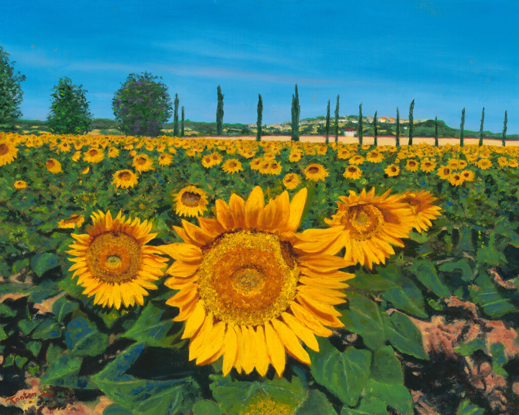"""Sunflowers in Umbria in Oil; Giclee 20""""x16"""""""